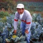 Nicolás Toma Cruz - The Nicolas Fund - BELAY